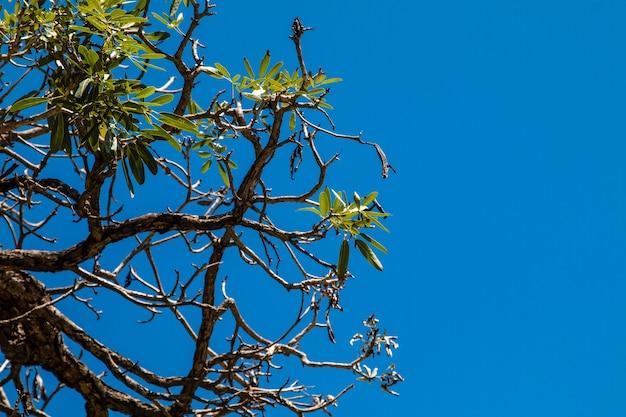 나무 뒤에 하늘