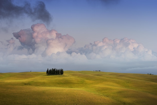 Sky and the cypresses