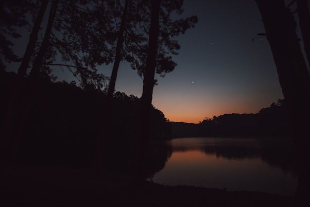 The sky at dawn is reflected in the lagoon looking through the pine forest.