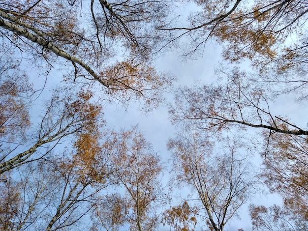 Sky in the forest in the fall