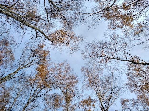 秋の森の空