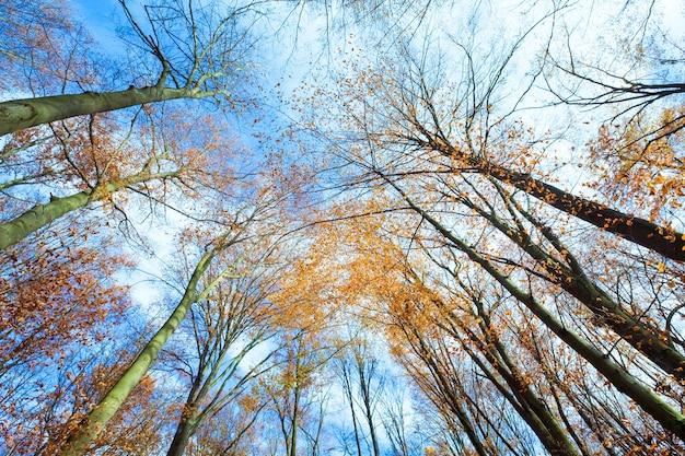 Небо с облаками сквозь осенние ветки деревьев (снизу)