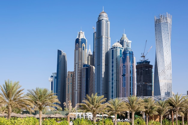 ドバイの高層ビルとヤシの木。アラブ首長国連邦
