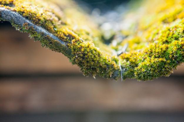 Шиферная крыша покрыта зеленым мхом