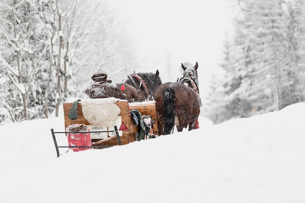 Сани с лошадьми в лесу