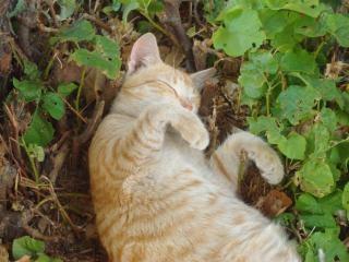 眠っている猫の動物