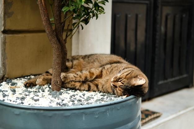 Sleeping cat under a tree on a street in istanbul turkey