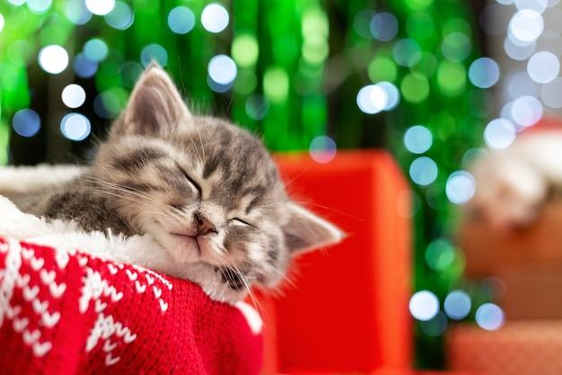 眠っているクリスマスの子猫