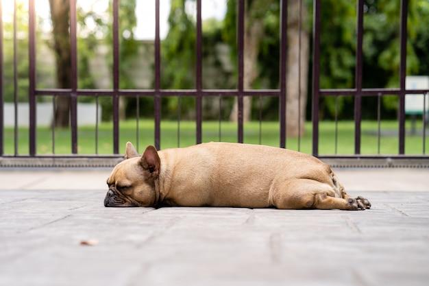 Спящий французский бульдог на открытом воздухе