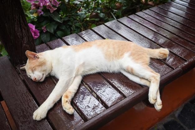 木製のテーブルで眠っている生姜猫