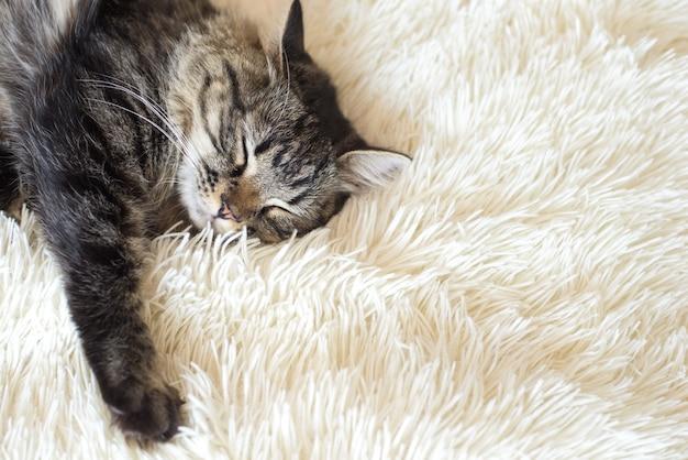 白い毛皮のカバーで眠っている幸せな子猫
