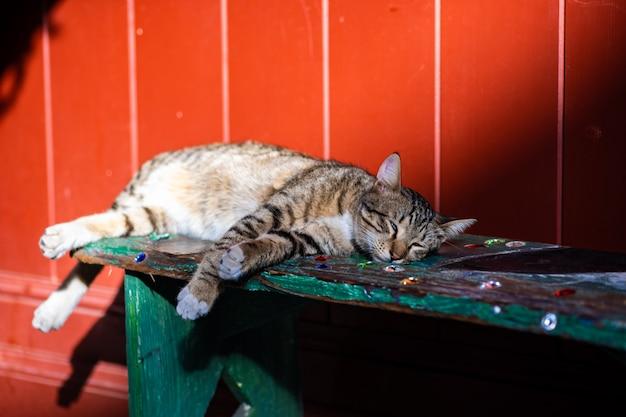 Sleeping homeless cat