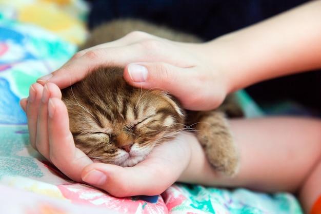Sleeping kitten in a female hands