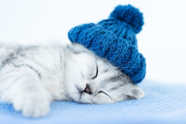 灰色の背景に青い帽子で眠っている子猫