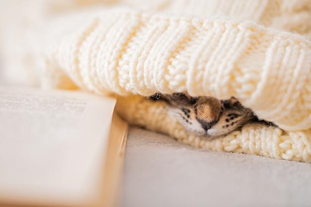 잠자는 고양이의 코는 따뜻한 니트 스웨터 아래에서 튀어나오고 책은 침대 옆에 있고 부드러운 초점입니다.