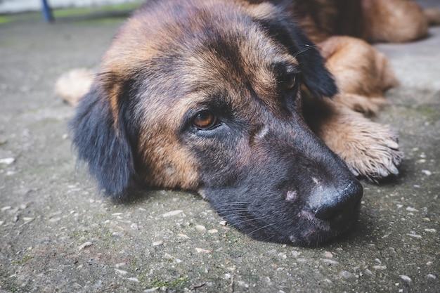 Спящая старая собака расслабляется на полу