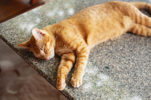 Sleeping red cat at table