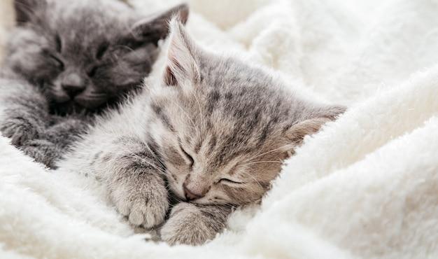 잠자는 얼룩 고양이는 발을 껴안습니다. 복사 공간이 있는 담요 위에서 잠을 쉬고 있는 새끼 고양이 가족