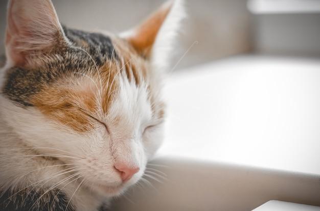 Sleeping tricolor cat. cute kitten. photo.