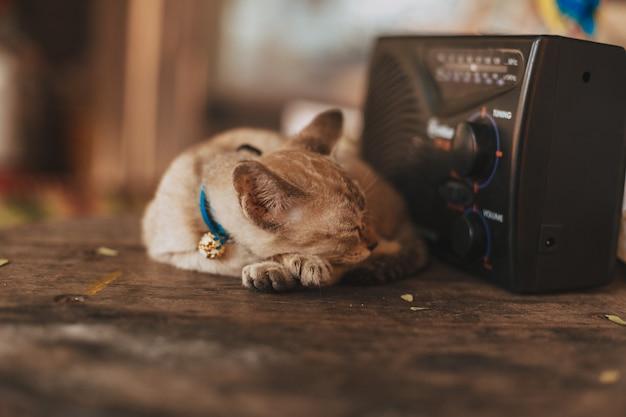 라디오 옆에 졸린 고양이