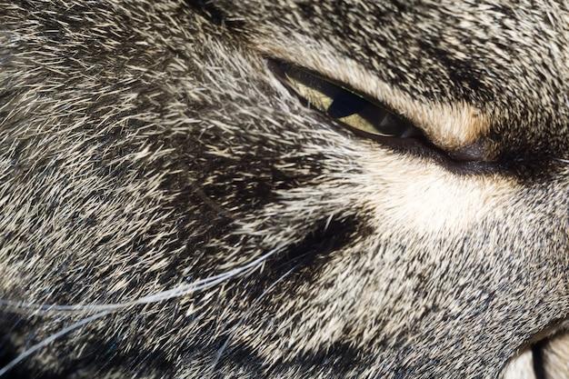 졸린 고양이
