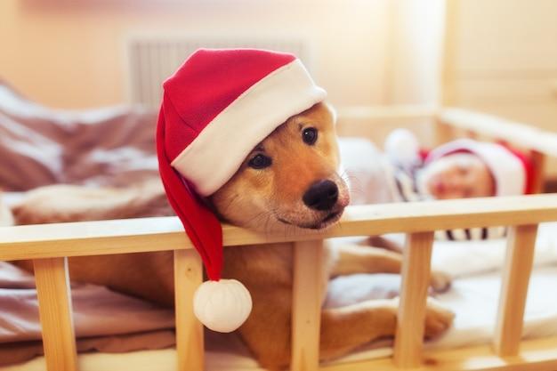 Сонный ребенок и щенок шиба-ину собака в красных шляпах санта-клауса в канун рождества