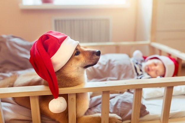 Sleepy child and puppy shiba inu dog in santa claus red hats on christmas eve