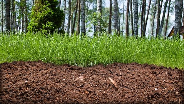 Кусочек почвы