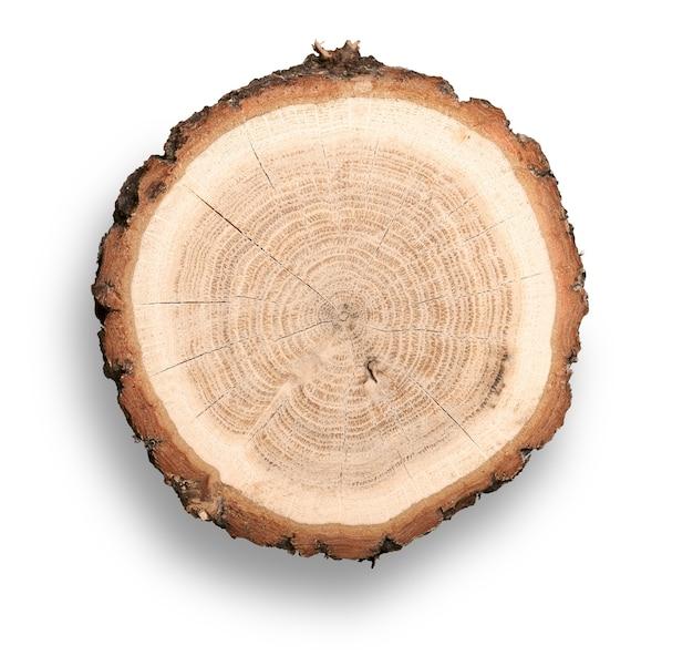 Кусок дерева с корой и годичными кольцами на изолированном белом фоне