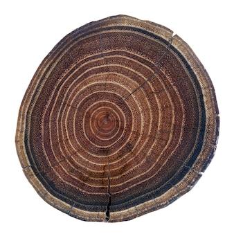 テクスチャと年次リングと木のスライス