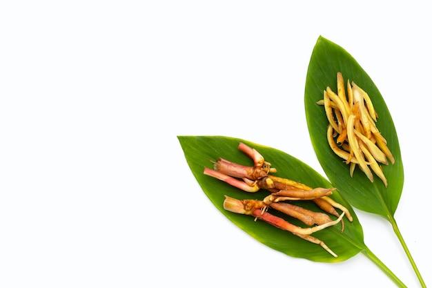 흰색 바탕에 녹색 잎에 얇게 썬 손가락 뿌리.