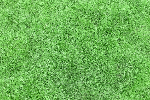 Slightly crushed green grass after rain for background