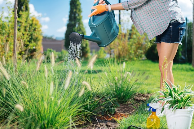 Slim gardener. slim gardener wearing short denim shorts holding garden sprinkler while standing near nice garden bed