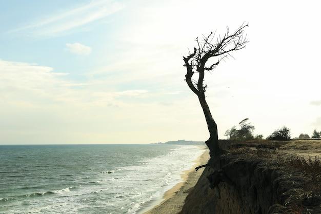 海のビーチで孤独な木の斜面