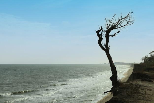 Склон с одиноким деревом на морском пляже