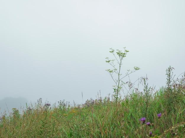 안개 낀 아침에 산 고산 잔디와 슬로프