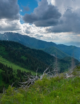 The slopes of the mountain range in the summer in the vicinity of the city of almaty, kazakhstan