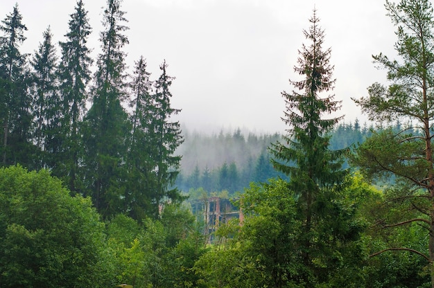 The slopes of the mountains, forest, hills, morning fog, abandoned, ruined building