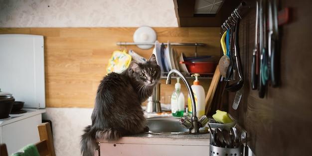 Хитрый лесной кот рыжий сидит на кухонном столе и посуде дренажный