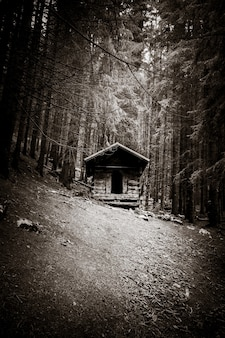 Small abandoned wooden cabin in a deep dark fir forest. black and white