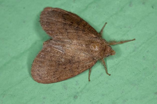 Малая взрослая бабочка отряда чешуекрылых