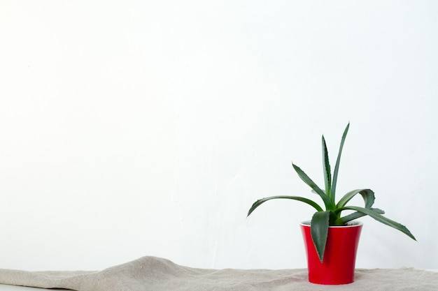 A small agave plant in a red pot stands on natural fabric on white console opposite the white wall