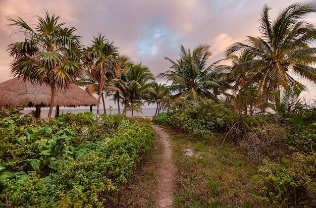 멕시코 마야 리비에라에 있는 야자수와 카리브해의 전형적인 초목 한가운데에 있는 작은 골목