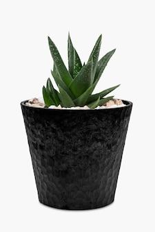 かわいい鍋に小さなアロエベラの植物 無料写真