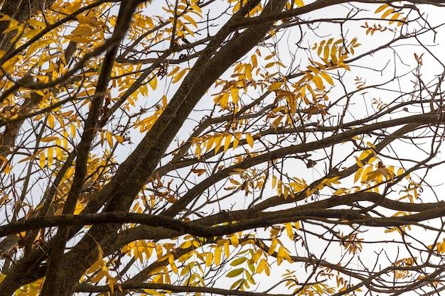 Небольшое количество пожелтевших листьев деревьев в осенний период. фото осенью года, небольшая глубина резкости