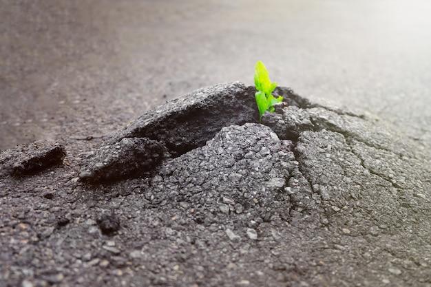 작은 녹색 식물은 도시의 아스팔트 바닥을 통해 자랍니다. 아스팔트 도로에 균열에서 성장하는 녹색 식물. 텍스트 또는 디자인을위한 공간입니다.