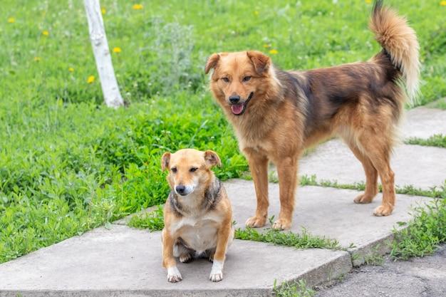 緑の芝生に囲まれた路地の庭にいる小型犬と大型犬