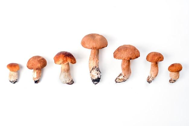 Маленькие и большие лесные белые грибы, изолированные на белом фоне. семейное понятие.