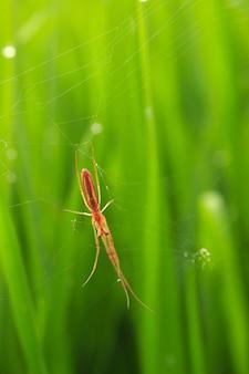 ぼやけた背景と緑の米で朝の小動物