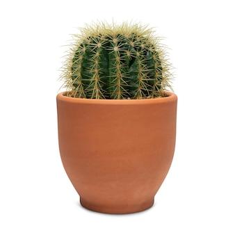 Cactus a botte piccolo in vaso di terracotta